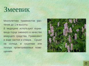 Многолетнее травянистое рас-тение до 1 м высоты. В медицине используют корне-