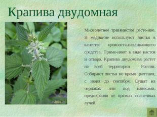 Крапива двудомная Многолетнее травянистое расте-ние. В медицине используют ли