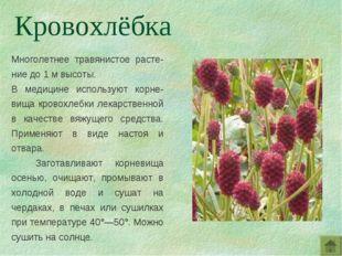 Многолетнее травянистое расте-ние до 1 м высоты. В медицине используют корне-