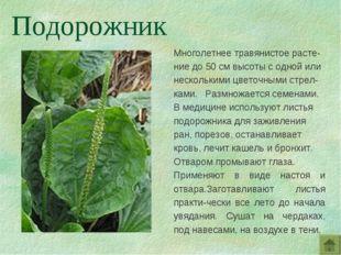 Многолетнее травянистое расте-ние до 50 см высоты с одной или несколькими цве