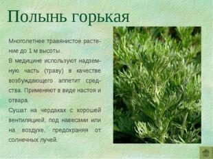 Многолетнее травянистое расте-ние до 1 м высоты. В медицине используют надзем