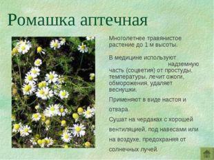Многолетнее травянистое растение до 1 м высоты. В медицине используют надземн
