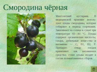 Смородина чёрная Многолетний кустарник. В медицинской практике исполь-зуют пл