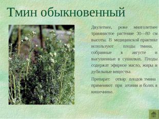 Тмин обыкновенный Двулетнее, реже многолетнее травянистое растение 30—80 см в