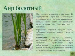 Аир болотный Многолетнее травянистое растение. В медицинской прак-ике использ