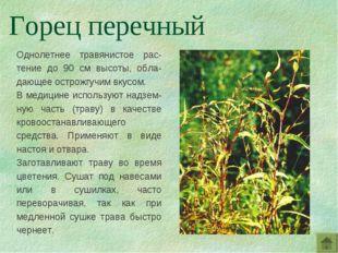 Однолетнее травянистое рас-тение до 90 см высоты, обла-дающее острожгучим вку
