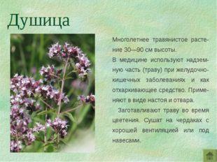 Многолетнее травянистое расте-ние 30—90 см высоты. В медицине используют надз