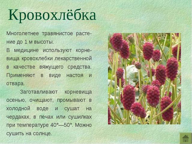 Многолетнее травянистое расте-ние до 1 м высоты. В медицине используют корне-...