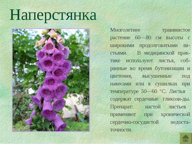 Наперстянка Многолетнее травянистое растение 60—80 см высоты с широкими продо...