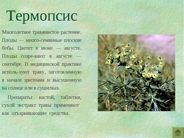 Термопсис Многолетнее травянистое растение. Плоды — много-семянные плоские бо...