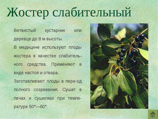 Ветвистый кустарник или деревце до 8 м высоты. В медицине используют плоды жо...