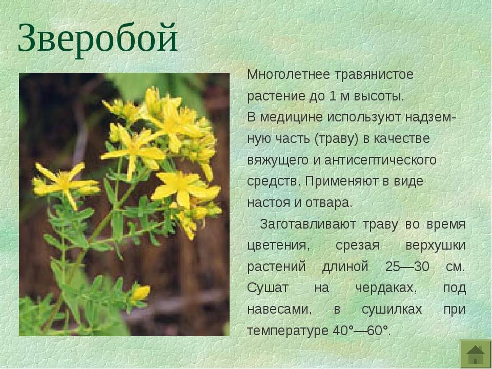 Многолетнее травянистое растение до 1 м высоты. В медицине используют надзем-...