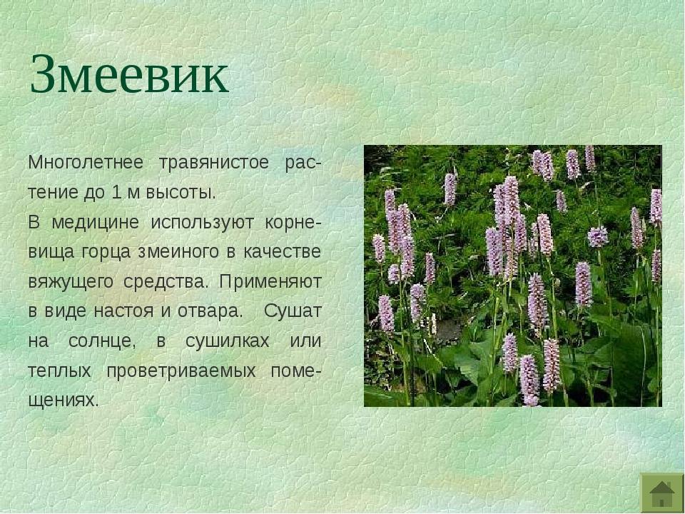 Многолетнее травянистое рас-тение до 1 м высоты. В медицине используют корне-...