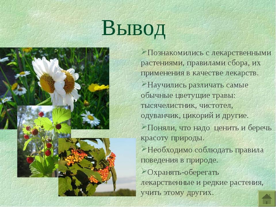 Вывод Познакомились с лекарственными растениями, правилами сбора, их применен...