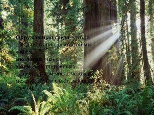 Окружающая среда – это та среда обитания, в которой мы живём. Экология - нау