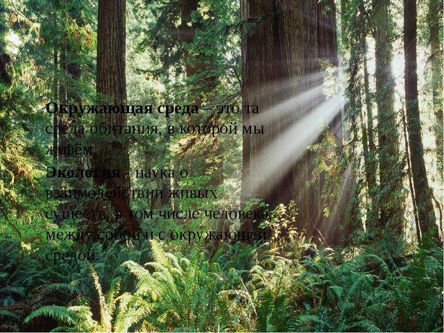 Окружающая среда – это та среда обитания, в которой мы живём. Экология - нау...