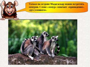 Только на острове Мадагаскар можно встретить лемуров. Слово «лемур» означает