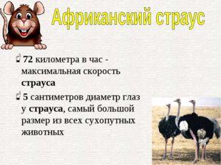 72километра в час - максимальная скорость страуса 5сантиметров диаметр глаз
