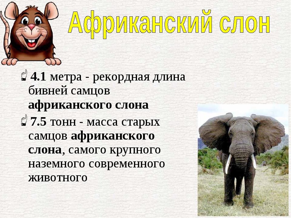 статья о сланах какие они
