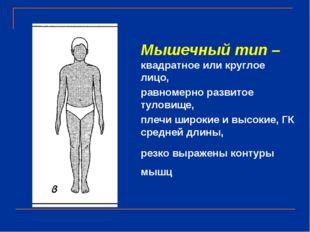 Мышечный тип – квадратное или круглое лицо, равномерно развитое туловище, пле
