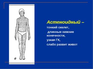 Астеноидный – тонкий скелет, длинные нижние конечности, узкая ГК, слабо разви