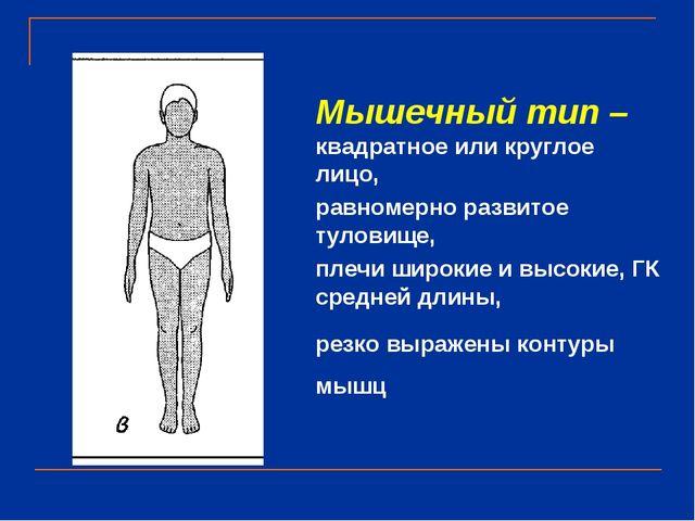 Мышечный тип – квадратное или круглое лицо, равномерно развитое туловище, пле...
