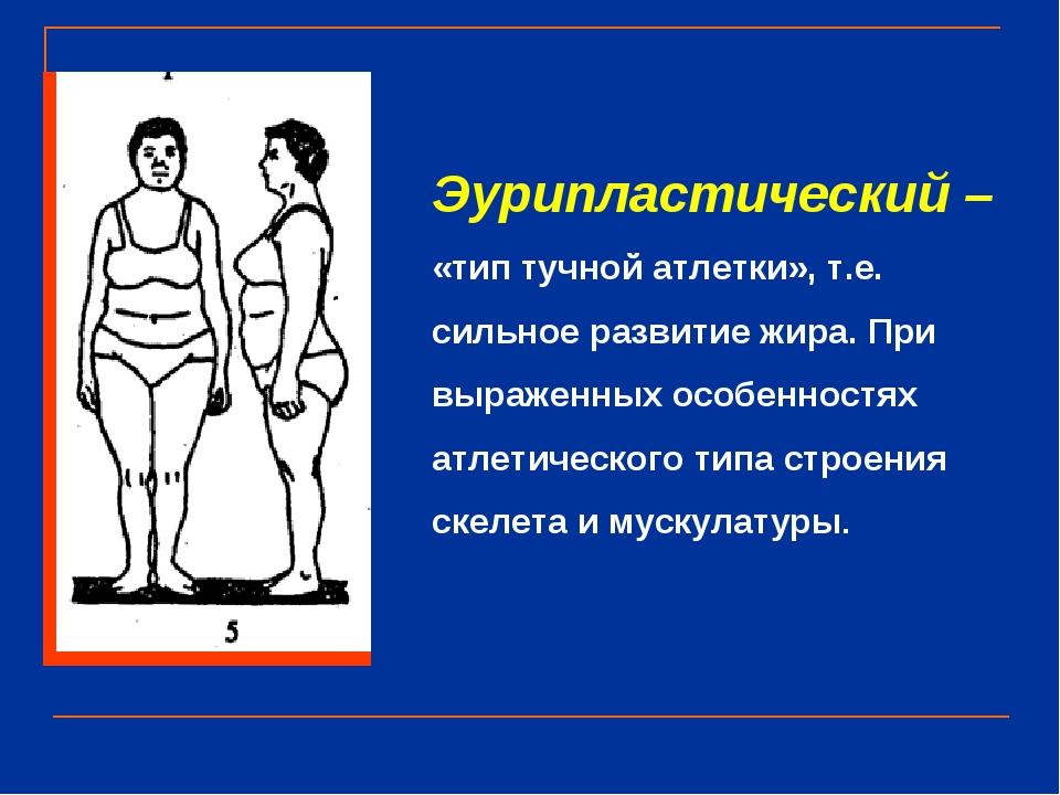 Эурипластический – «тип тучной атлетки», т.е. сильное развитие жира. При выра...