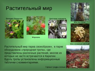 Растительный мир Растительный мир парка своеобразен, в парке оборудована «пр