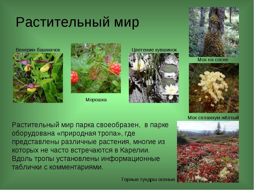 Растительный мир Растительный мир парка своеобразен, в парке оборудована «пр...