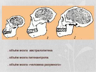1. объём мозга австралопитека 2. объём мозга питекантропа 3. объём мозга «че