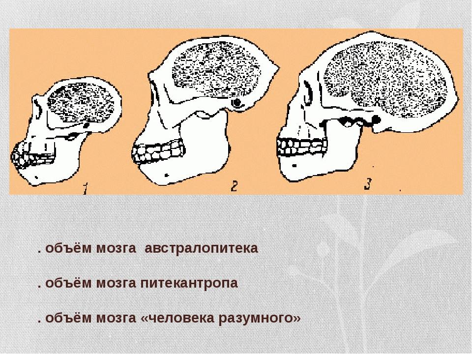 1. объём мозга австралопитека 2. объём мозга питекантропа 3. объём мозга «че...