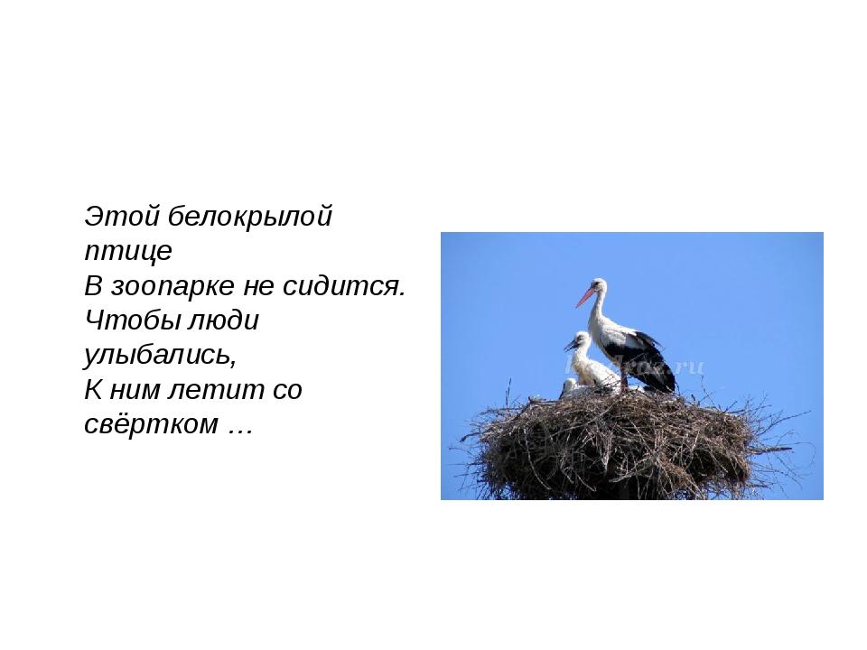 Этой белокрылой птице В зоопарке не сидится. Чтобы люди улыбались, К ним лет...
