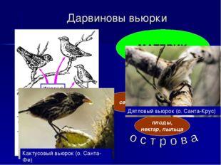 Дарвиновы вьюрки МАТЕРИК семена насекомые плоды, нектар, пыльца Кактусовый вь