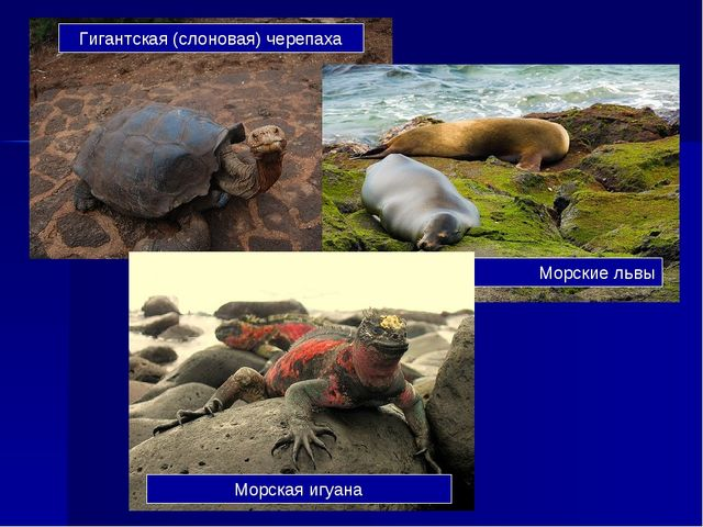 Гигантская (слоновая) черепаха Морские львы Морская игуана