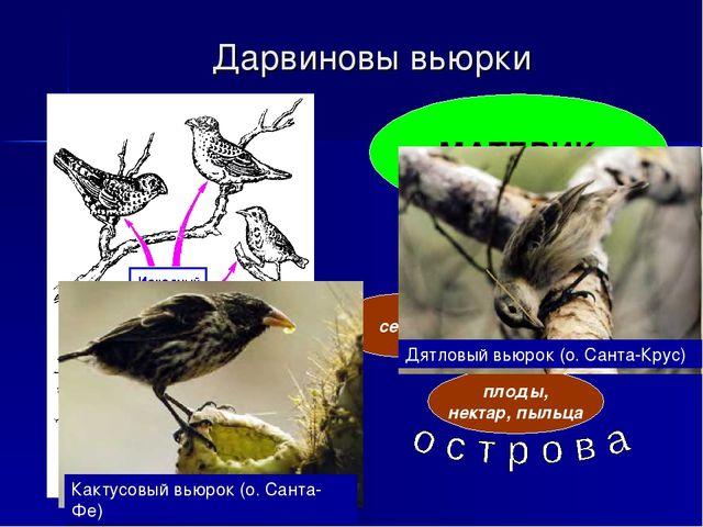 Дарвиновы вьюрки МАТЕРИК семена насекомые плоды, нектар, пыльца Кактусовый вь...