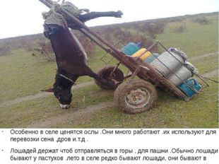 Особенно в селе ценятся ослы .Они много работают .их используют для перевозк