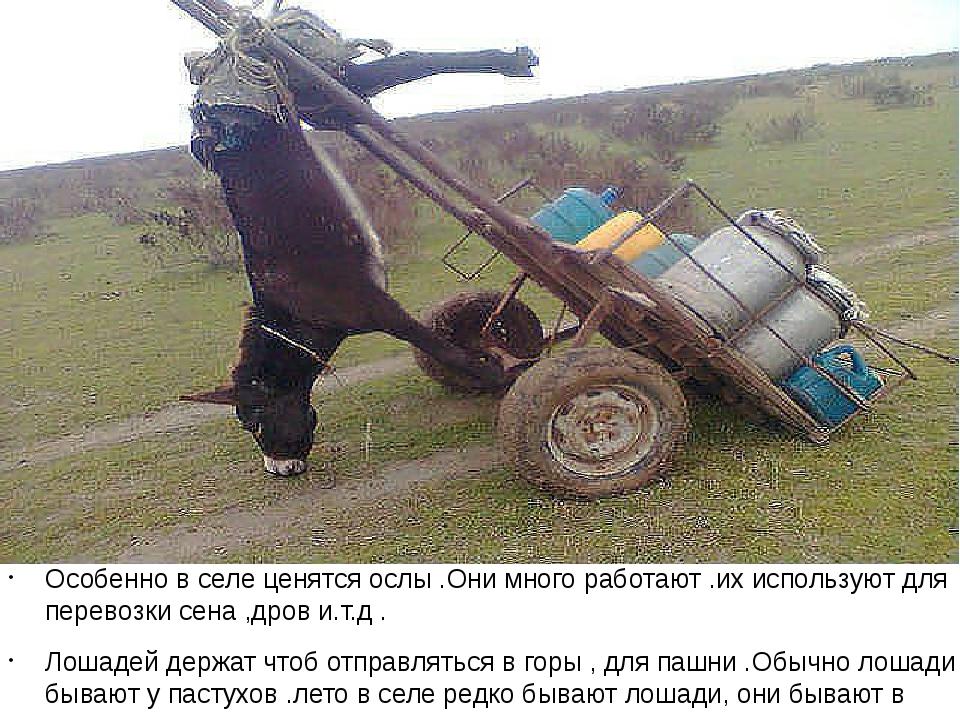 Особенно в селе ценятся ослы .Они много работают .их используют для перевозк...