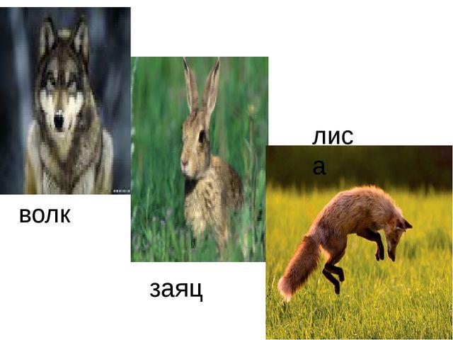 волк заяц лиса