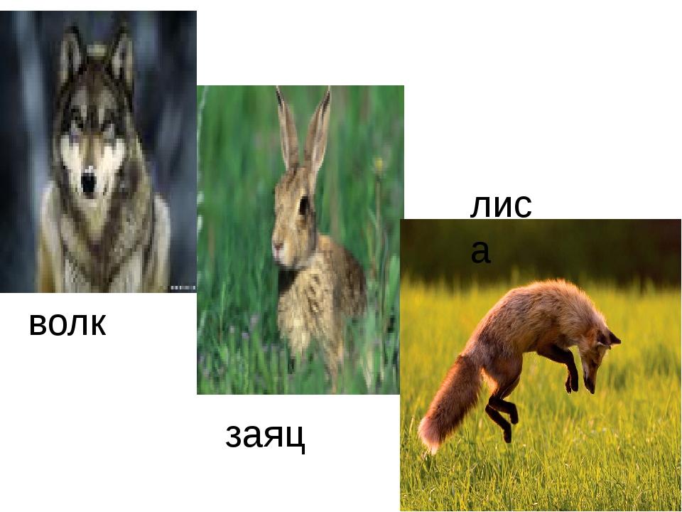 Картинки с изображением зайца лисы белки волка медведя бурундука ежа, открытки классе