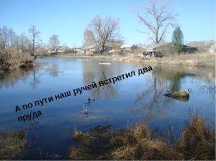 А по пути наш ручей встретил два пруда