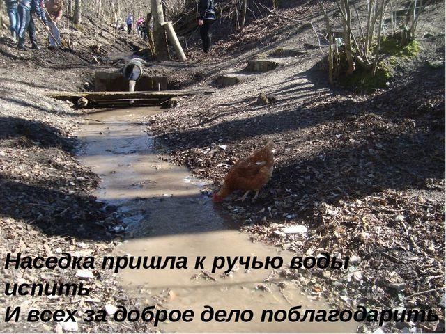 Наседка пришла к ручью воды испить И всех за доброе дело поблагодарить