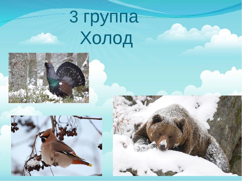 3 группа Холод