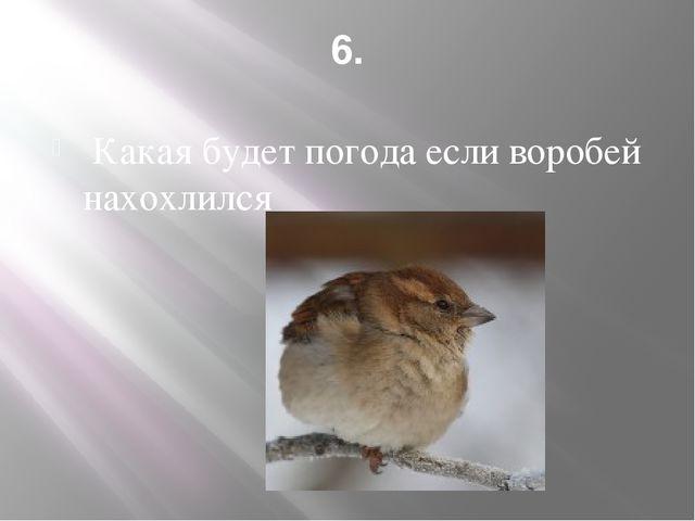 6. Какая будет погода если воробей нахохлился