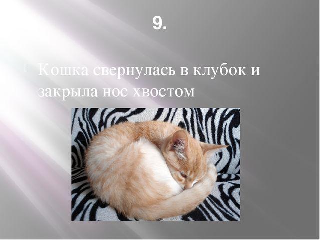 9. Кошка свернулась в клубок и закрыла нос хвостом