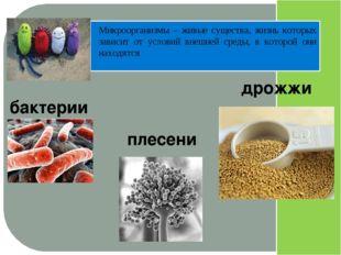 Микроорганизмы – живые существа, жизнь которых зависит от условий внешней ср