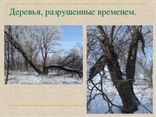 Деревья, разрушенные временем.