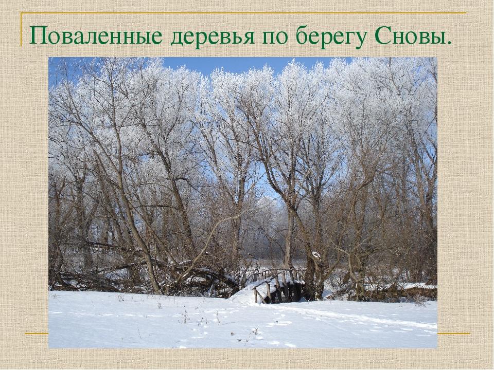 Поваленные деревья по берегу Сновы.