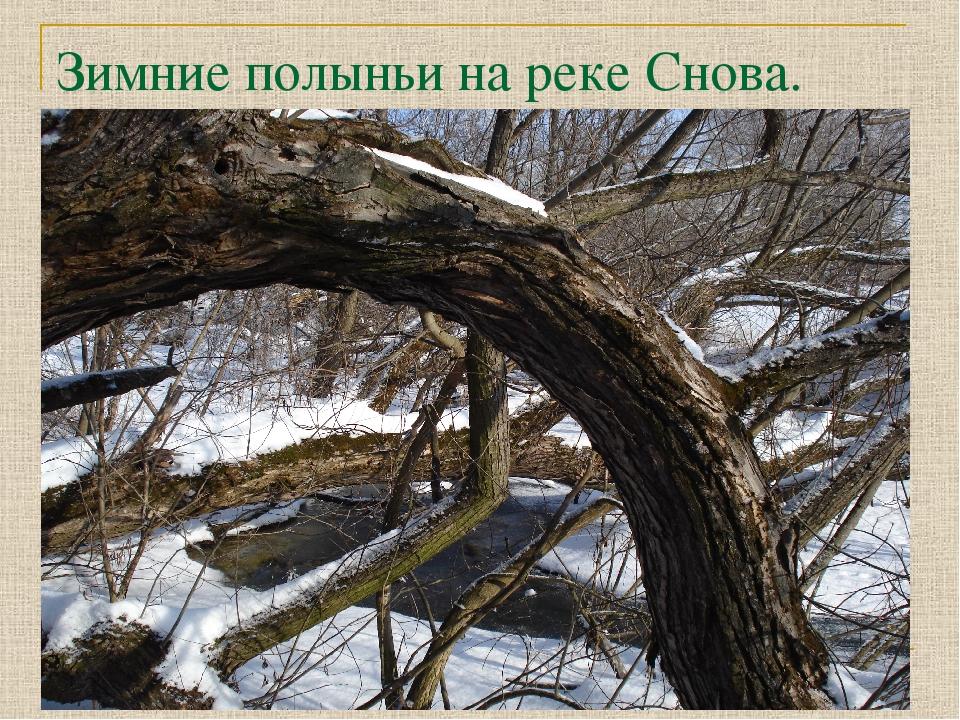 Зимние полыньи на реке Снова.