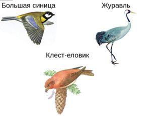 Большая синица Журавль Клест-еловик