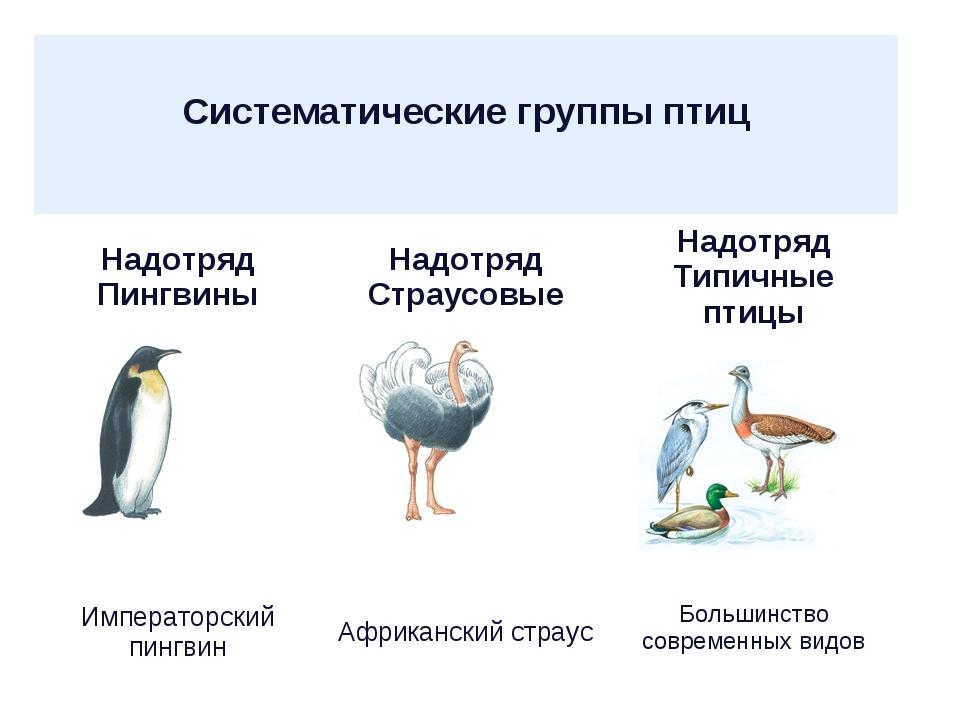 Систематические группы птиц  Надотряд ПингвиныНадотряд СтраусовыеНадотряд...